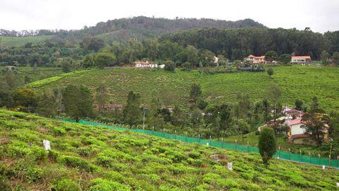 Tea Estates on the opposite hill