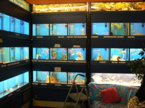 5 Of the Leading Fish Tanks Available to You