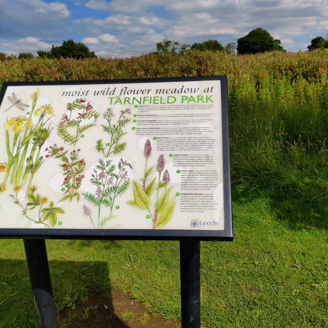 Yeadon Tarnfield Park wild flowers