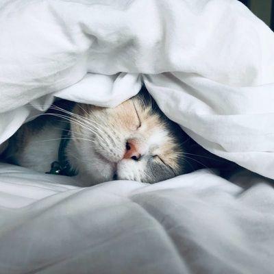 cat-boarding-winnipeg