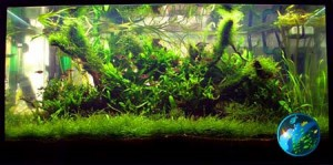 8 simple steps on How to grow aquatic moss on driftwood or log?
