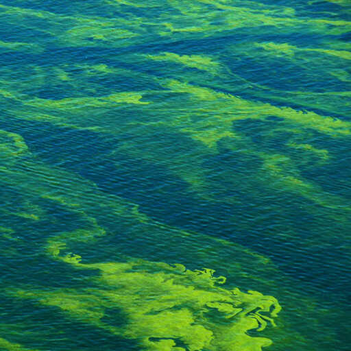 Harmful Algae Bloom Survey