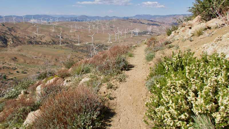 Trail heading to Tehachapi