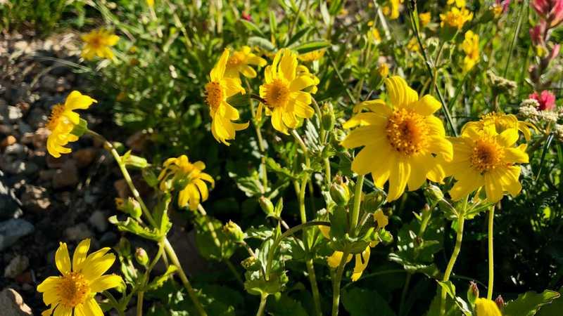 Wildflowers in the sun