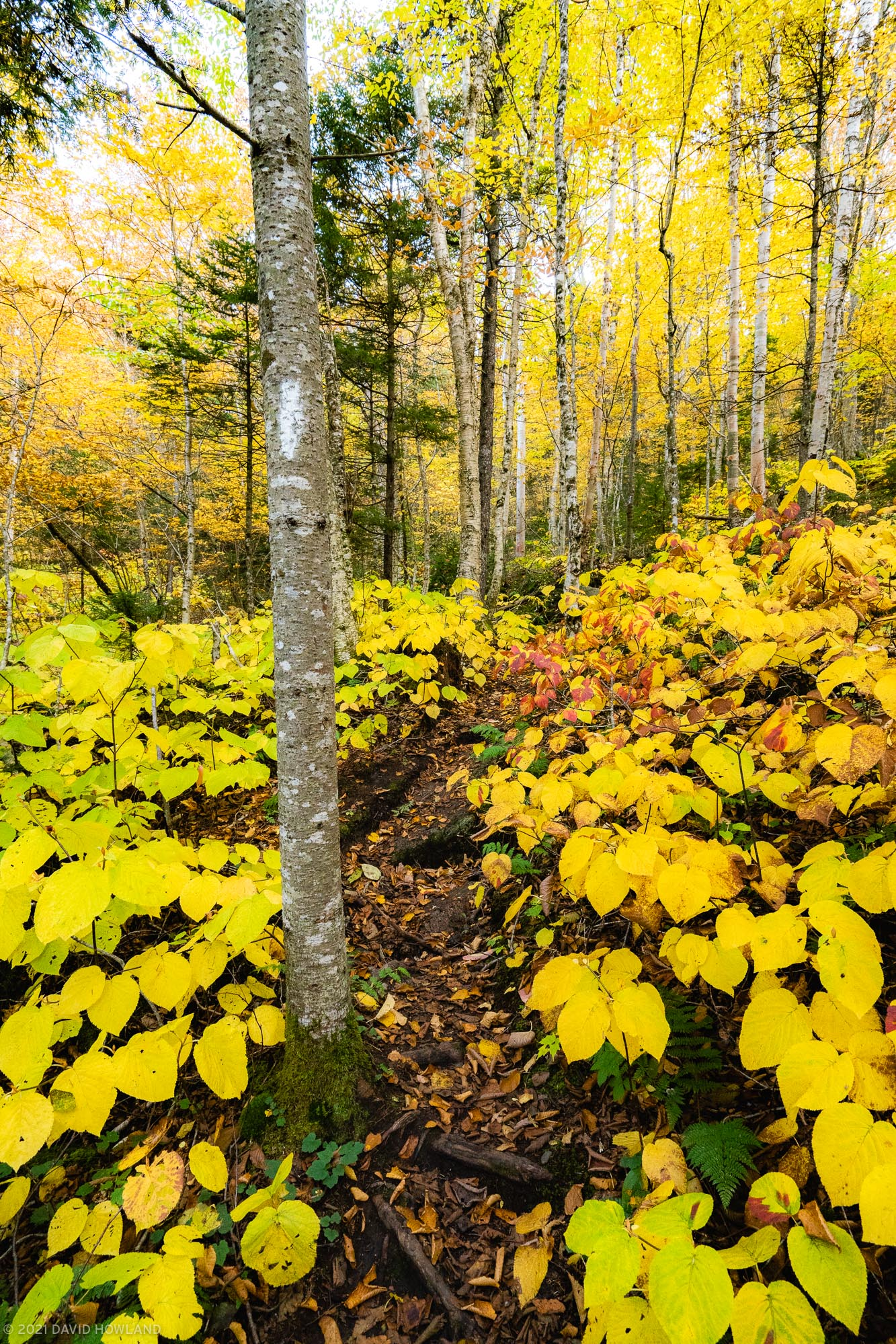 Bright Yellow Hiking in the White Mountains