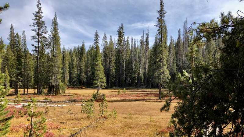 A meadow in Lassen Volcanic National Park