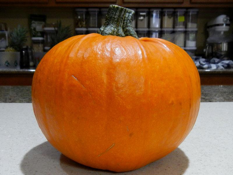 Sugar Pie Pumpkin