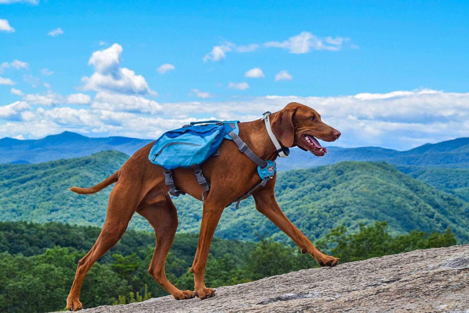 Dog-Friendly Hikes: South Carolina
