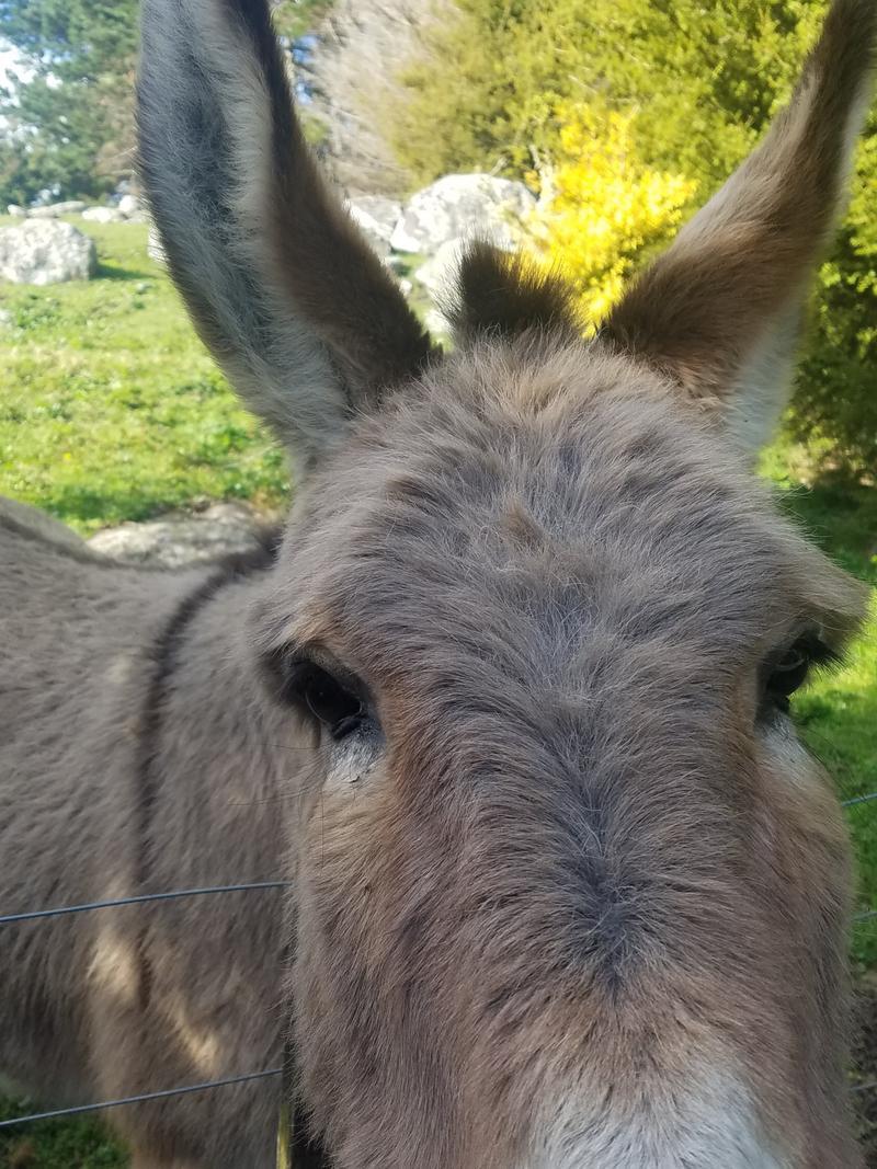 Donkey greetings