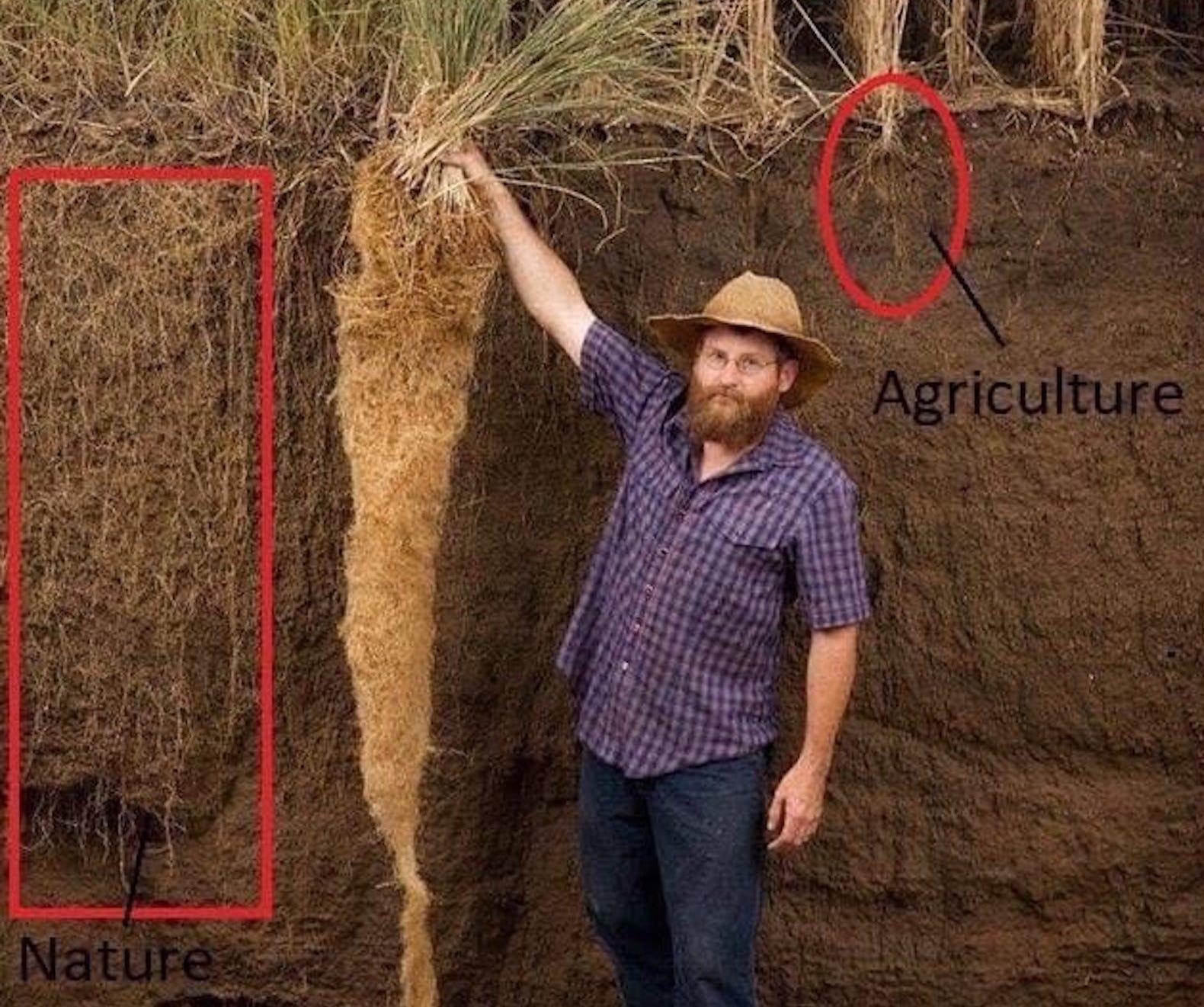 Différence de réseau racinaire entre agriculture traditionnelle Versus agriculture industrielle