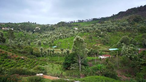 View from the plot