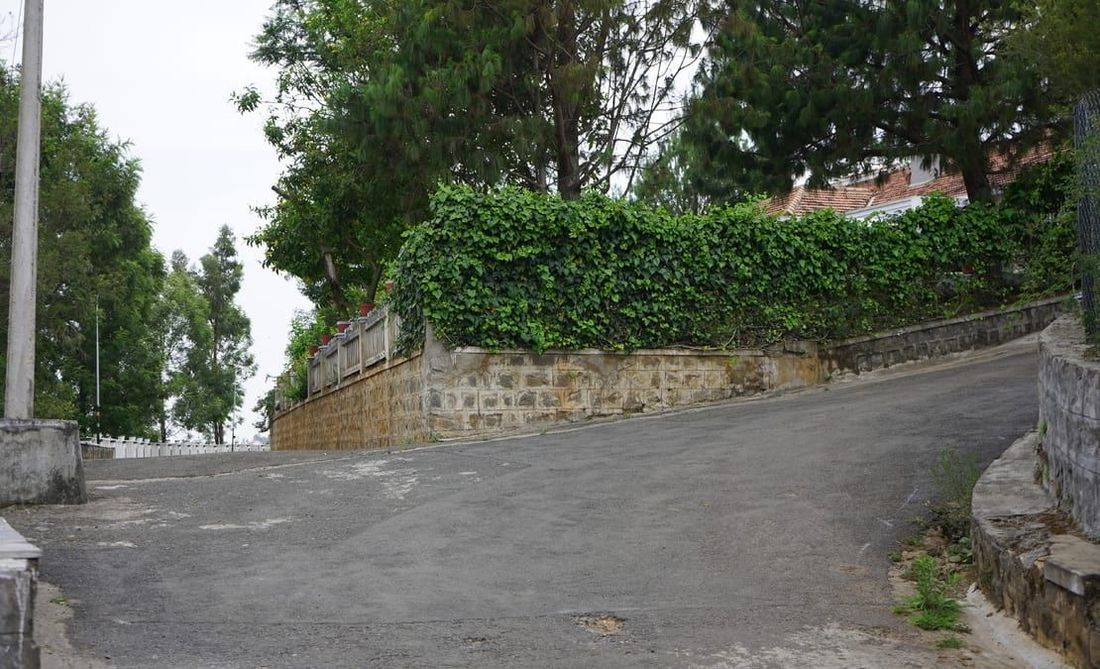 Road corner with a fully grown hedge of shrubs