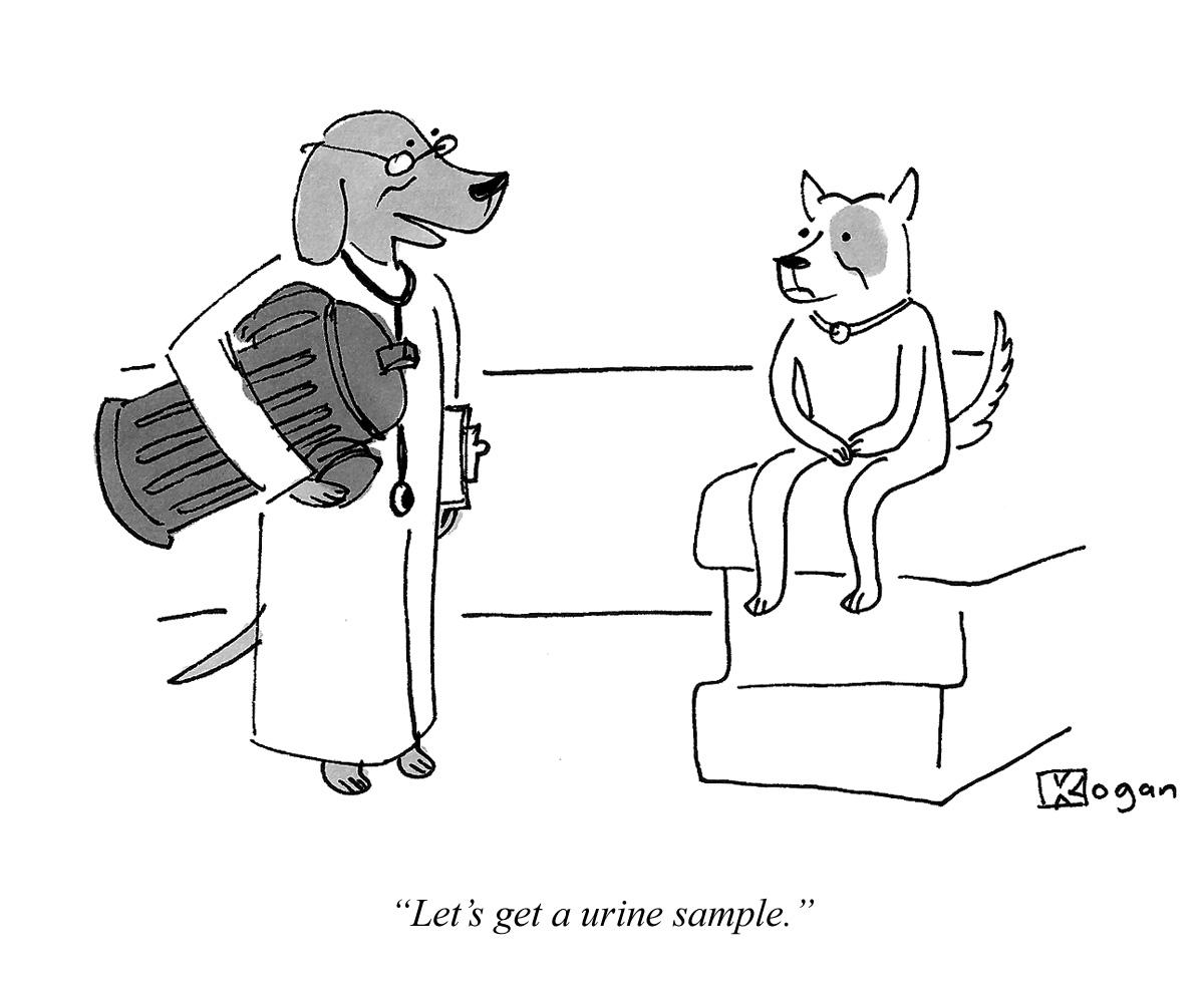 Let's get a urine sample.