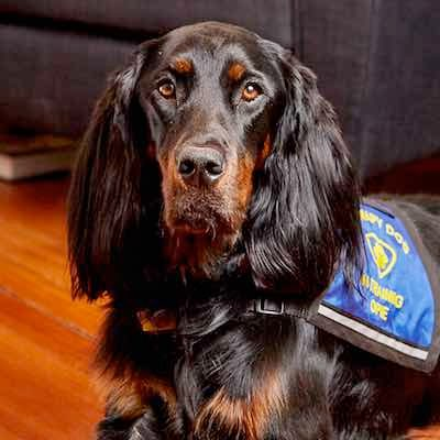 Ophelia, therapy dog for Azimuth Psychological in Boston, MA