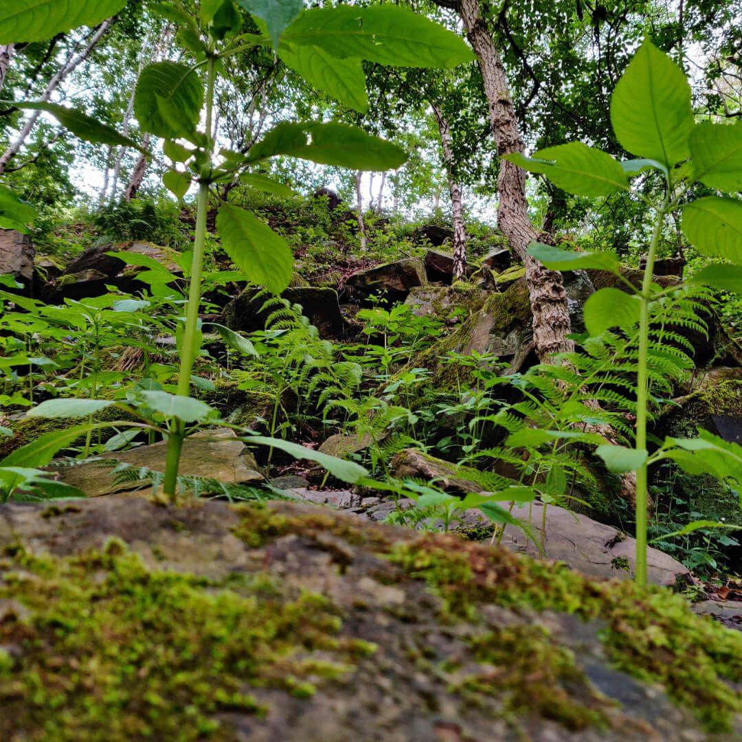 Post Hill Nature Reserve ferns