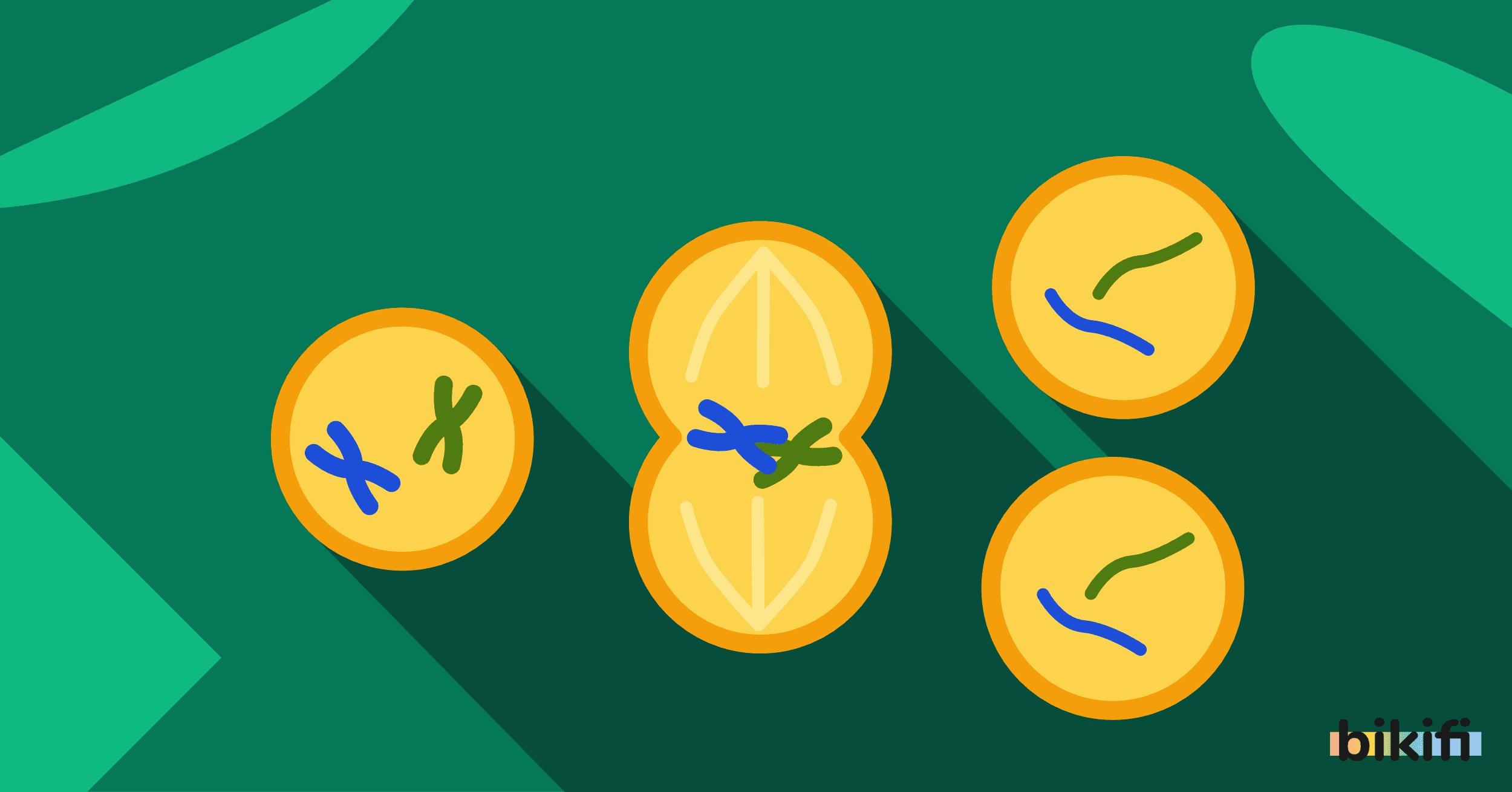 Hücre Bölünmeleri