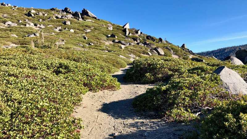 A smooth trail through manzanita