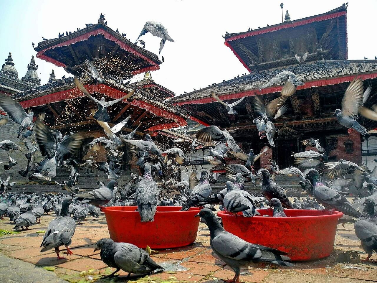 Kathmandu Durbar Squares and the Pegions