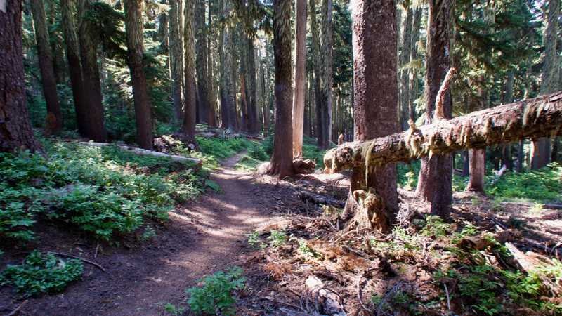 The trail enters a forest