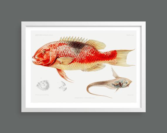 Fish vintage print