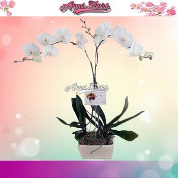 Bunga Anggrek 4