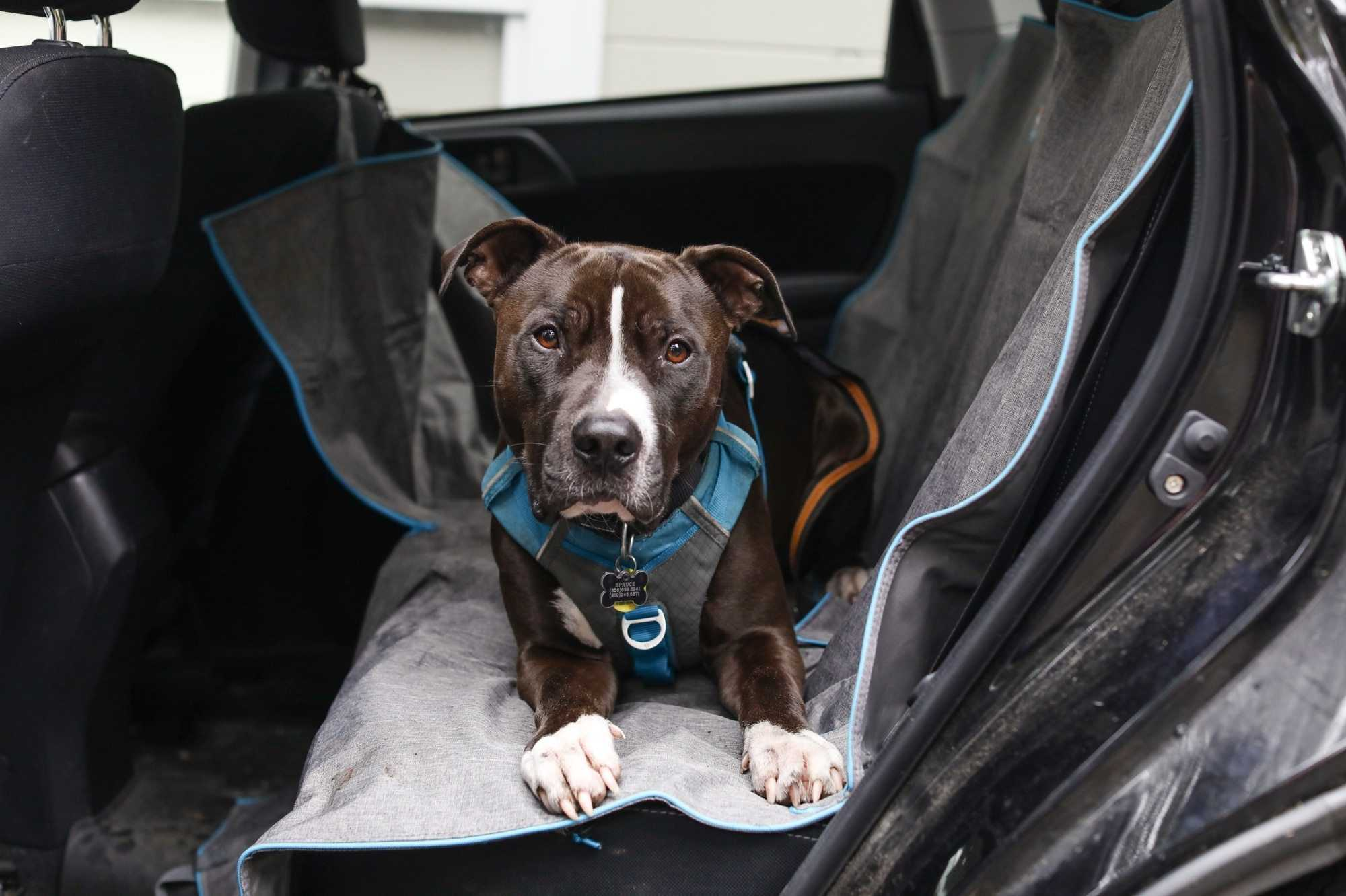 Top 3 Wet Weather Dog Products