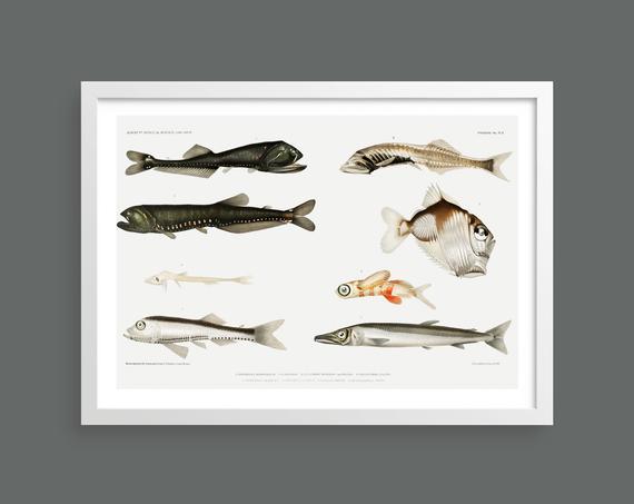 Fishes vintage print