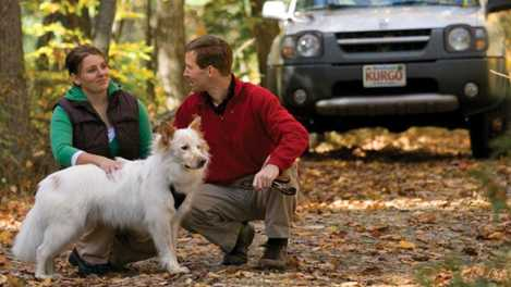 Tackling Your Dog's Car Anxiety