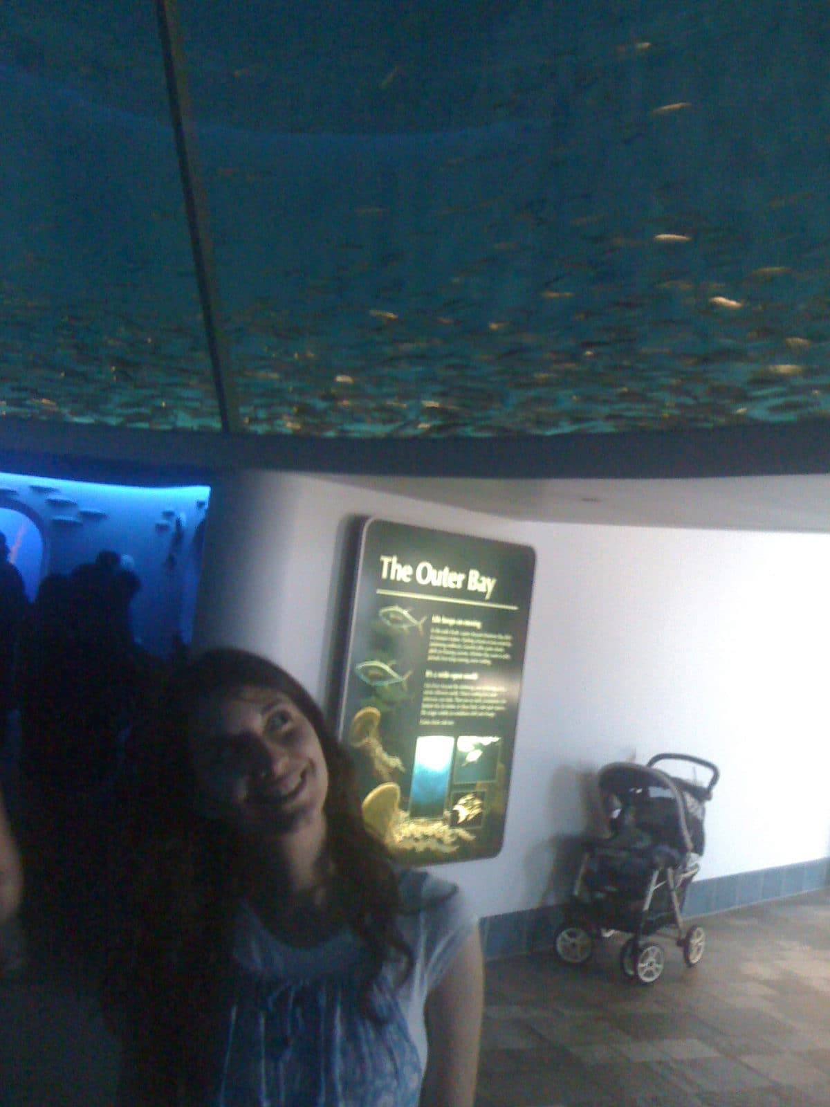 mariam amongst a school of fish