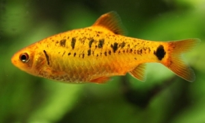 Tips for Choosing the Best Fish for a Freshwater Aquarium