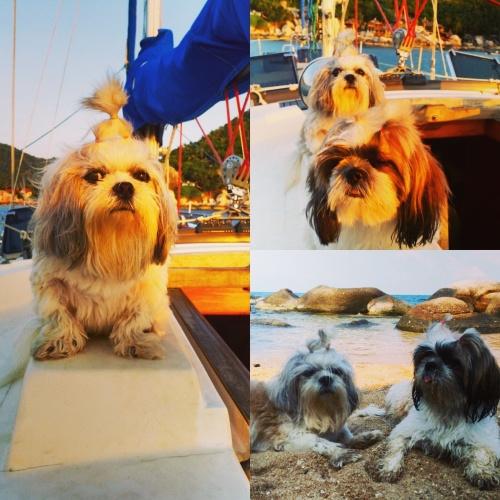 Impressions of Independence Yacht, Koh Samui, Thailand