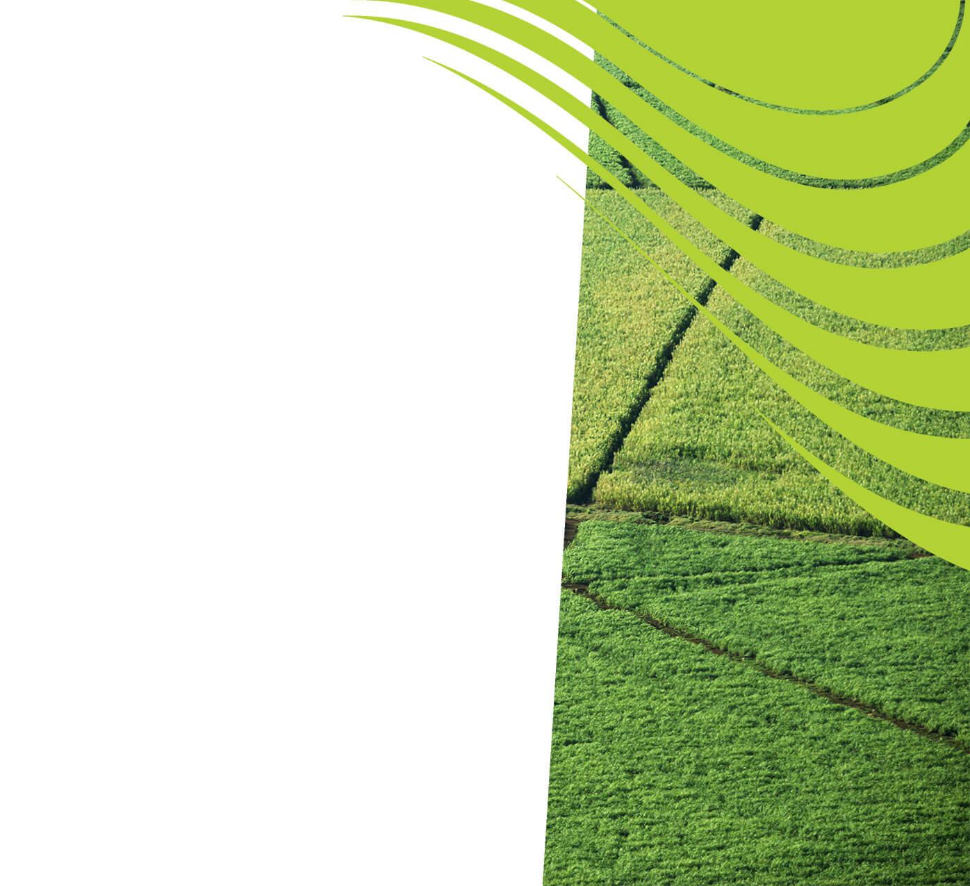 fertiliser for sugarcane