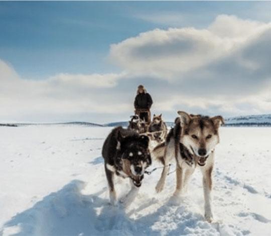 Sorrisniva   Dog Sledding in Alta Norway