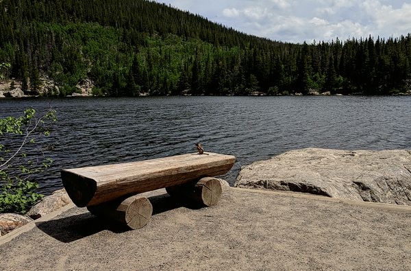 An animation of a chipmunk sits on a simple wooden bench, seemingly gazing out over a mountain lake. At the end of the loop, it looks up and back at the photographer.