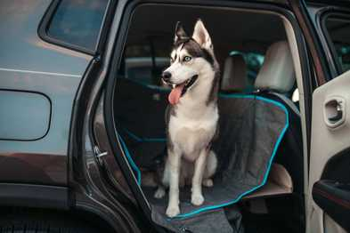 Top 5 Reasons Why you Need Car Seat Protection
