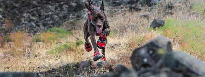 Trail Tested: Why Your Dog Needs Shoes