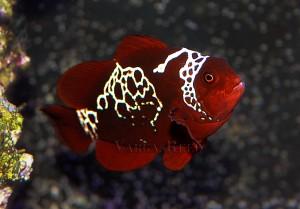 Do I Need A Rearing Tank for My Aquarium?