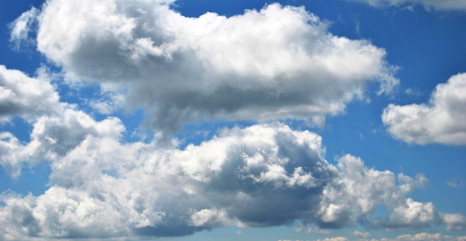 Nori frumoși în Plaiul Nucului