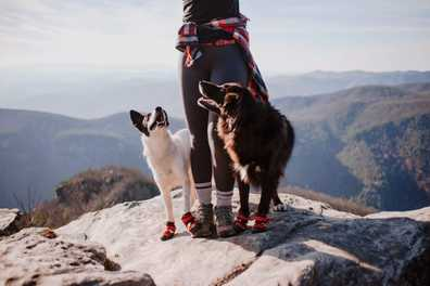 Why Your Dog Needs Boots
