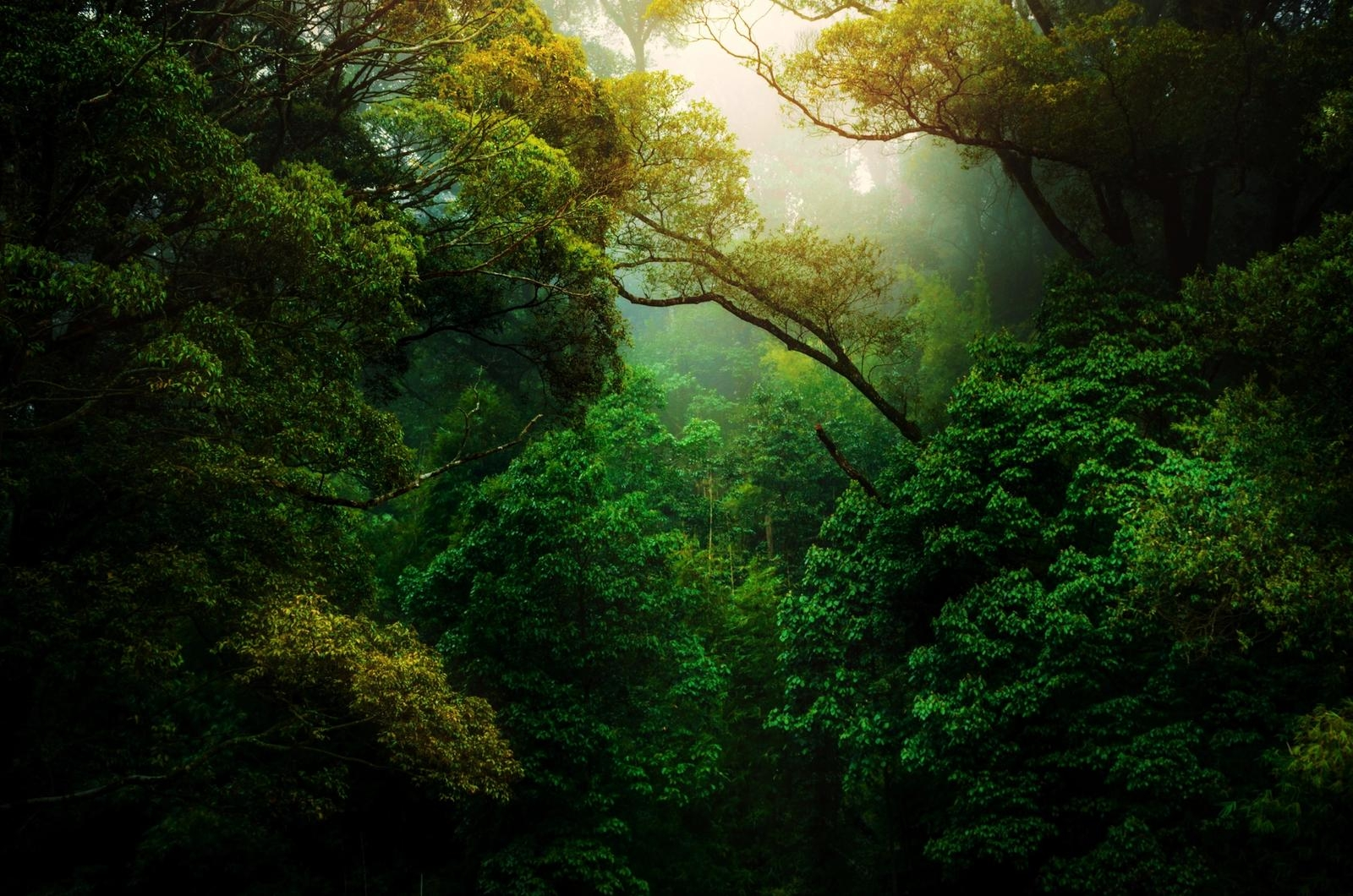 Forest background image
