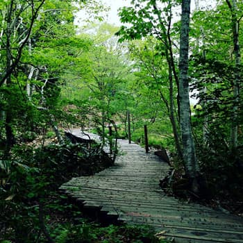 Naeba boardwalk