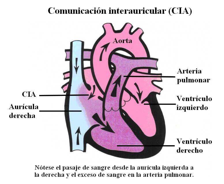 Fisiologia-CIA