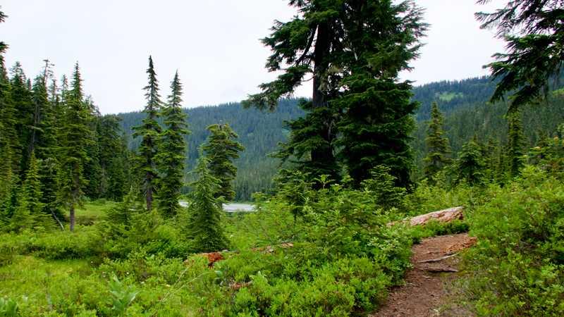 The trail goes near Lake Janus