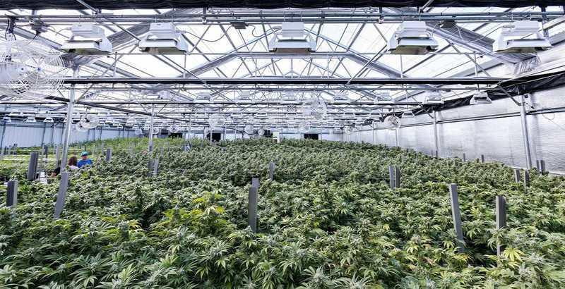 Thailand's Indoor Medical Marijuana Farms
