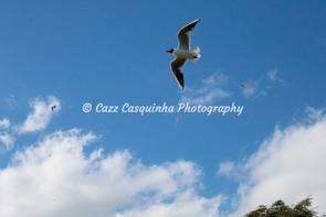 Bird flying through the blue, cloudy sky