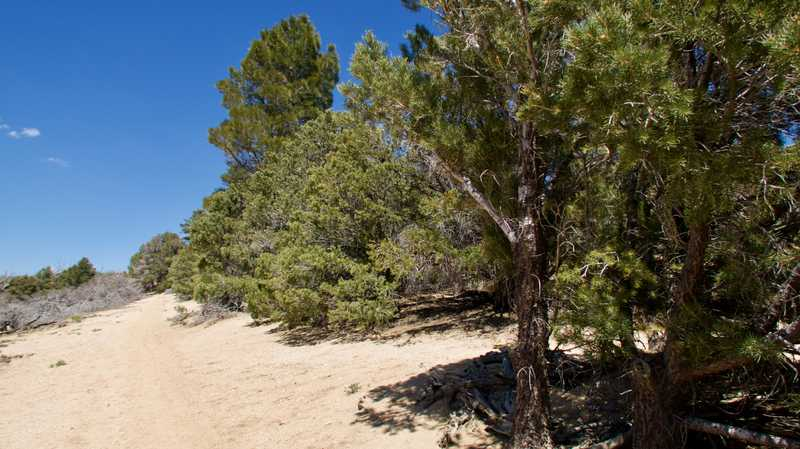 A small stand of trees in the desert