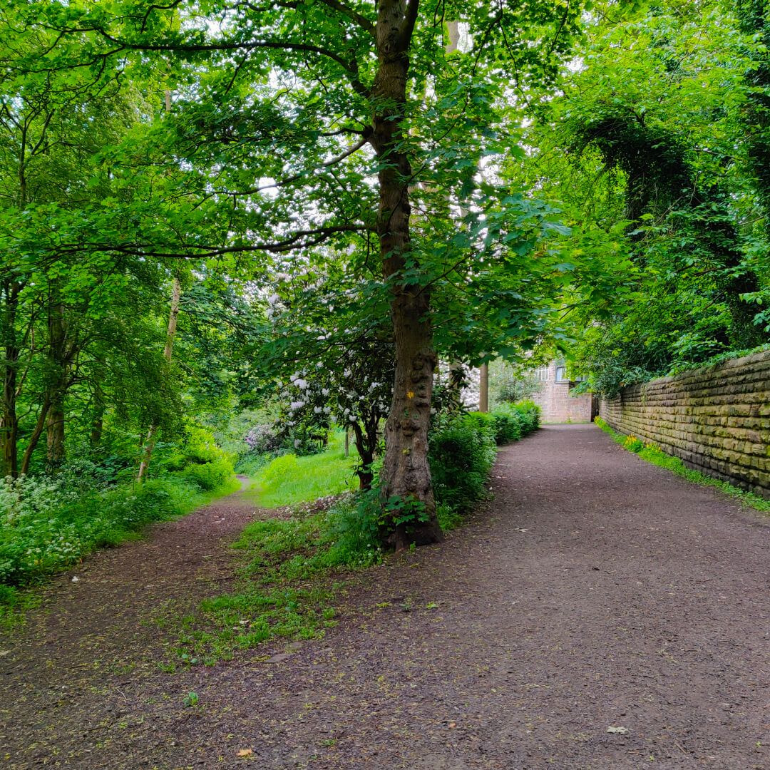 Meanwood Valley Local Nature Reserve path at Woodhouse Ridge