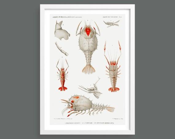 Deep-sea Crustaceans