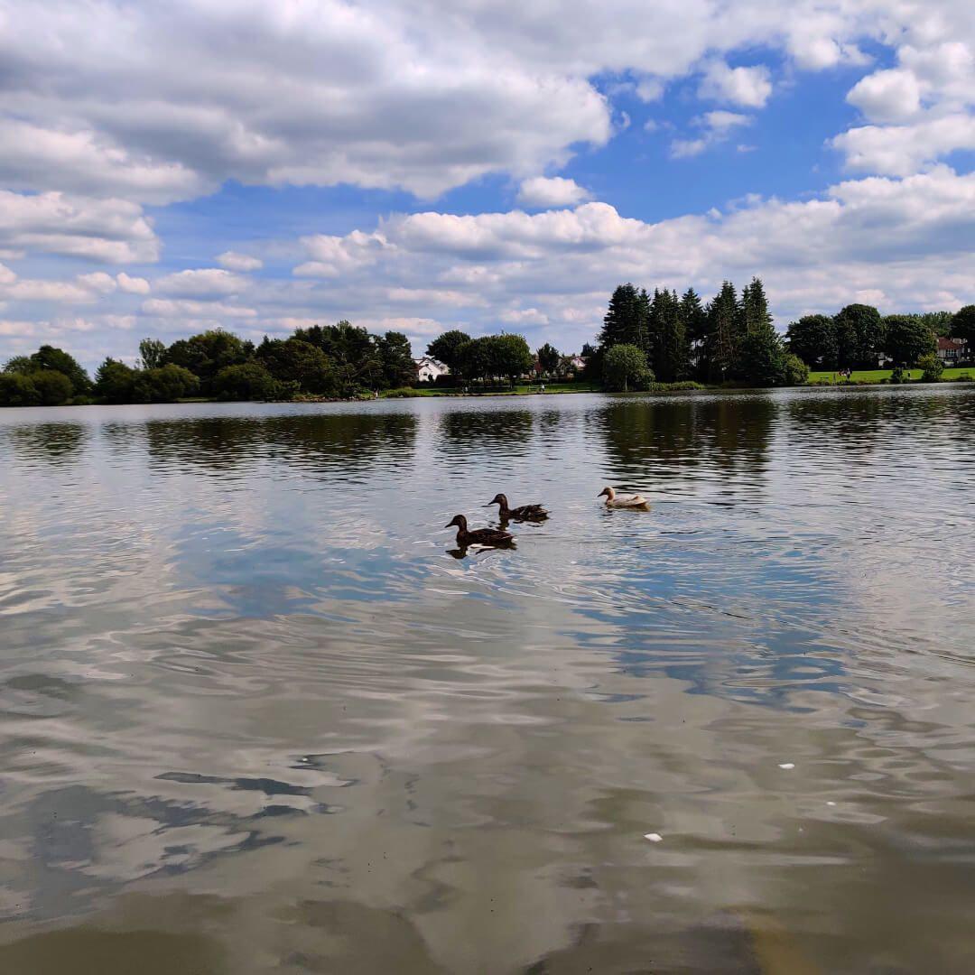 Ducks at Yeadon Tarn Lake