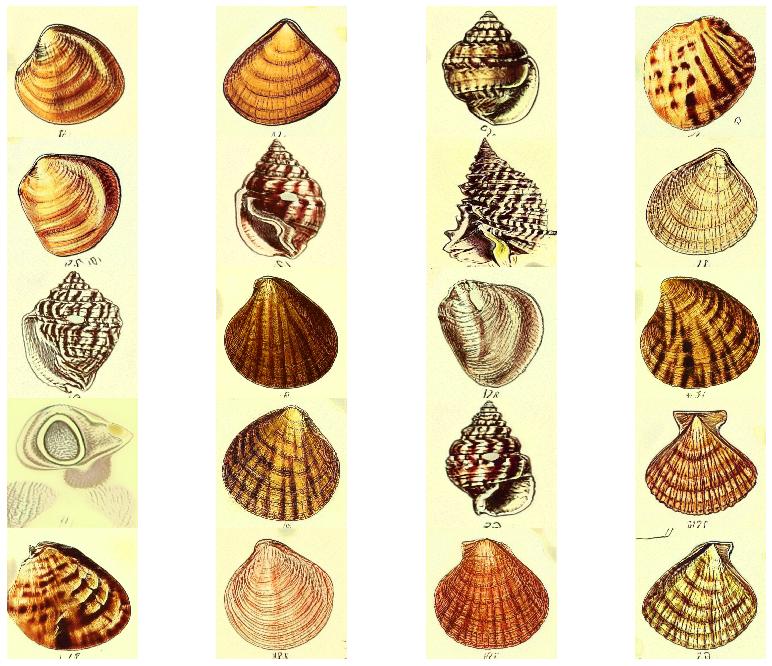 shells_2.png